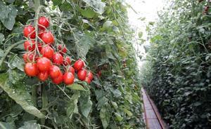 """Asaja: """"El sector de frutas y hortalizas está siendo uno de los sectores que más inspecciones está generando"""""""