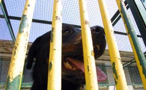 Dos perros de raza peligrosa atacan a un menor en el Bulevar de Jaén