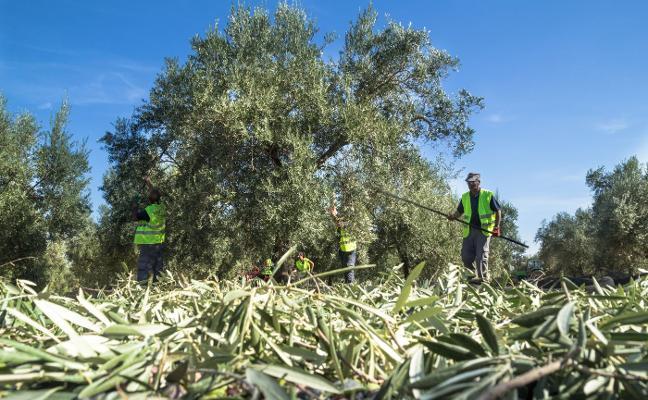 Rebajan los módulos agrarios por la sequía, con ahorro para 90.000 agricultores jienenses