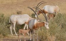 Relacionan la desaparición de especies como la gacela con las guerras en África