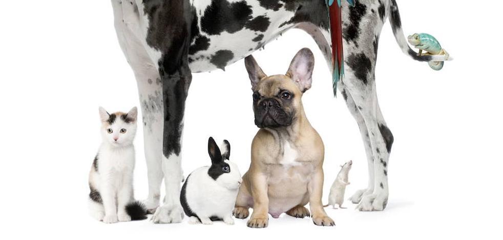 ¿Sabes cuántas mascotas hay en la provincia? Más que habitantes en la capital