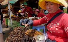 Las tarántulas, víctimas de la deforestación y de la gastronomía en Camboya