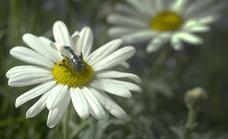 La NASA piensa en abejas robóticas para explorar Marte