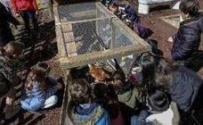 El 'invento' que revoluciona la educación española: un gallinero en el colegio