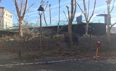 Ecologistas pide al Ayuntamiento parar de inmediato las podas «agresivas» al «incumplir» FCC el pliego