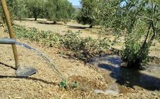 UPA-Jaén pide a la CHG que todos los autorizados puedan acceder al riego extra
