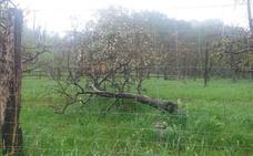 Herido grave un niño tras caerle encima un árbol de 15 metros y quedar atrapado