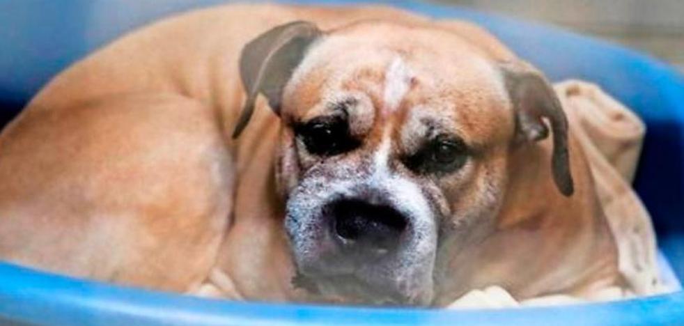 Indulto a 'Chico', el perro que mató a sus dueños en Alemania