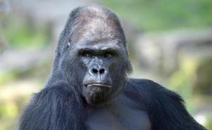 ¿Qué es el efecto gorila que impide encontrar vida extraterrestre?