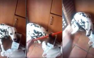 Imputan a una mujer por maltrato animal por pegar a un cachorro con una cadena de acero y un palo