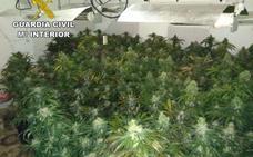 Más de 8.100 plantas marihuana incautadas y 27 detenidos en un mes en Granada