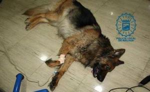 Arrastra a su perro durante 400 metros con una cuerda y le propina varias patadas