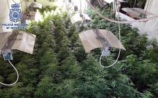 Desmantelan tres plantaciones de marihuana gestionadas por una pareja en Almería