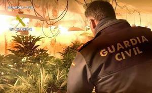 Desmantelan cuatro viviendas de Pozo Alcón donde se cultivaba marihuana