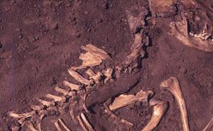 Hallan restos de perros que vivieron con humanos hace 10.000 años