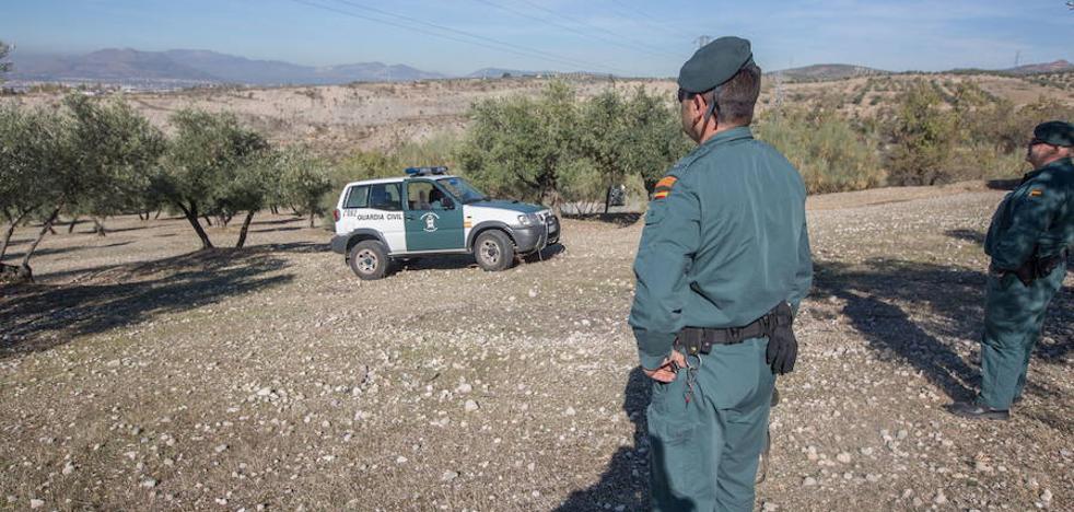 Cuatro nuevos equipos especiales vigilarán los robos en el olivar