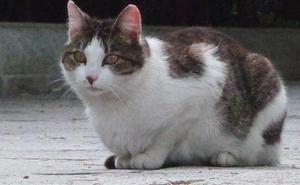 Muere una mujer contagiada de un virus al ser mordida por un gato, el primer caso en el mundo
