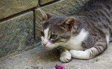 Detienen a unos gatos que llevaban móviles a los presos en una cárcel de Costa Rica