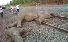 Mueren cuatro elefantes tras ser arrollados por un tren en India