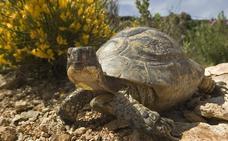 ADIF reduce en 150 hectáreas las expropiaciones por la tortuga mora