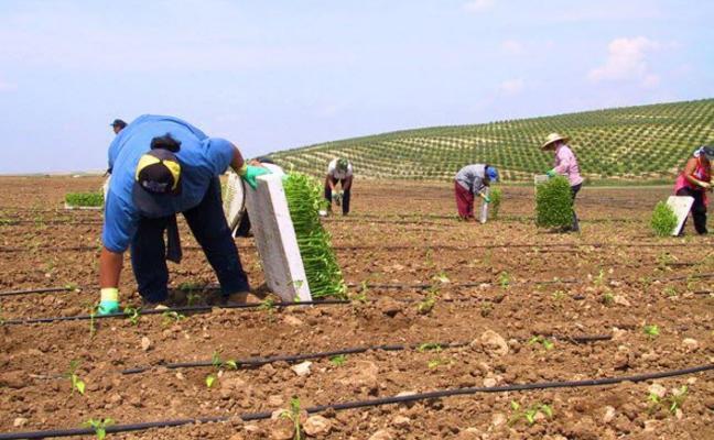 La Ley de Agricultura da carpetazo a la reforma agraria emblema del primer gobierno del PSOE