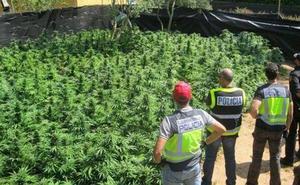 Almería, en el Top 10 de provincias de España en las que más marihuana se incauta