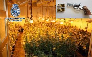 Desmantelan tres plantaciones interiores de cannabis en Granada