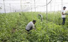 El Gobierno andaluz da luz verde al proyecto de Ley de Agricultura