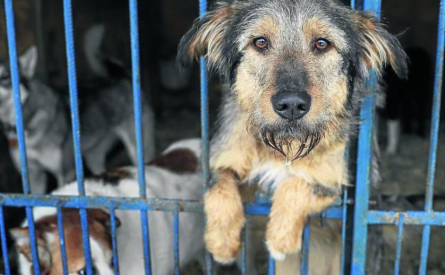 El consejo de los veterinarios para evitar el abandono de los perros en España