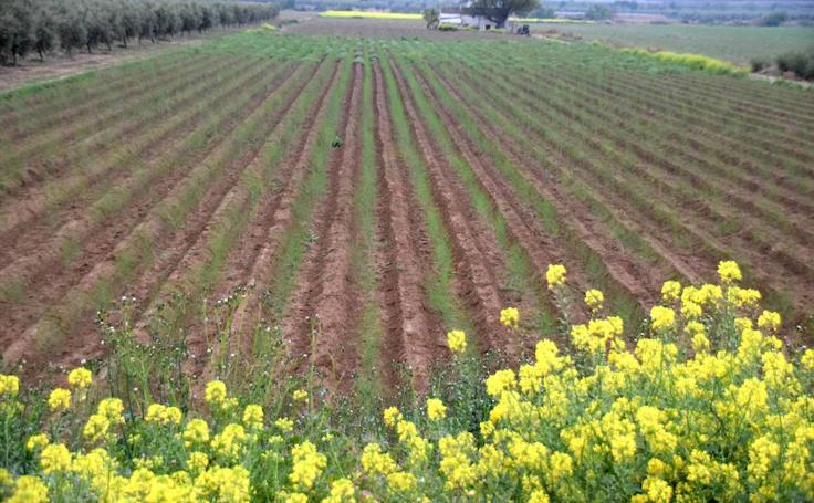 Un año de trabajo que termina con la destrucción de parte de la cosecha