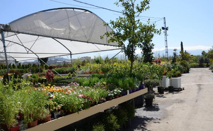 9 plantas de temporada para tu jardín que duran todo el año