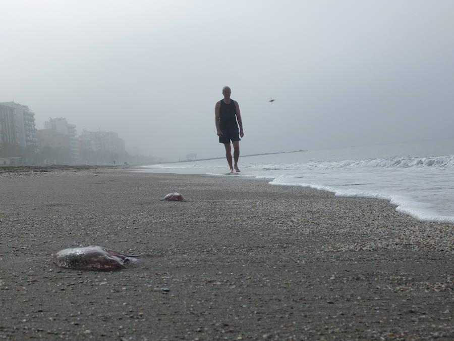Las playas de Almería se llenan de medusas 'carabela portuguesa'