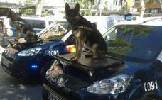 Héroes de 4 Patas pide a la ONU un día mundial que reconozca la labor de los perros policía