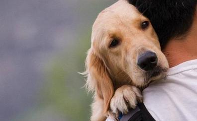 No es verdad que un año humano equivalga a siete de perro: ¿Cuánto es realmente?