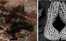Descubren dos nuevas criaturas en los mares de España