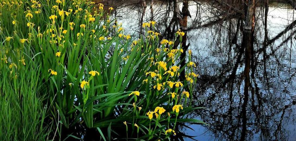 Rutas de las flores del agua por Granada