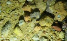 Espeleólogos jienenses descubren una nueva especie