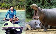 El problema de los hipopótamos de Pablo Escobar que perdura 15 años después