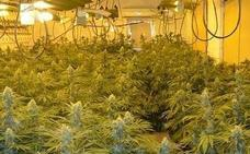Desmantelan un laboratorio con 3.000 plantas de marihuana en Pulianas