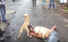 «¡Ni te acerques»!: el vídeo del perro defendiendo a su dueño borracho arrasa en la Red