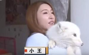 Descubre que su perro es un zorro porque no le gustaba el pienso