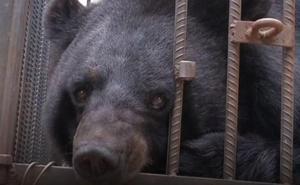 El insólito caso de la familia que compró un oso y lo crió dos años creyendo que era un perro