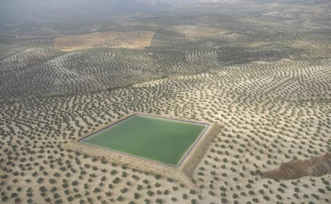 Ninguna de las diez explotaciones más grandes del mundo de olivar está en Jaén