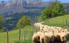 La curiosa forma de cortar el césped en Roma: con ovejas