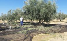 Más de 13.000 agricultores de Jaén se quedaron fuera de la PAC en 4 años, según la UPA