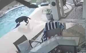 El heroico perro que se lanzó a la piscina para salvar a su amigo