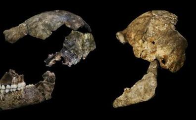 El nuevo hallazgo que cuestiona la evolución hacia el Homo sapiens