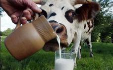 Un seminario analiza mañana en Granada los mitos sobre la leche