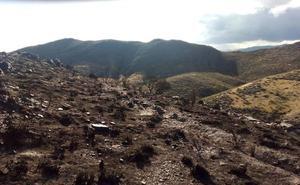 El fuego de Tabernas por un rayo calcina 2,3 hectáreas de matorral