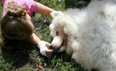La innovadora terapia con perros para tratar a niños con el síndrome de alcoholismo fetal